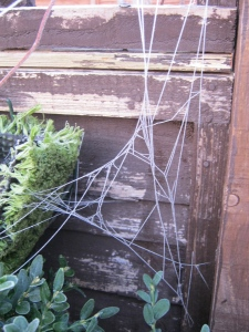 Frosty spider webs.