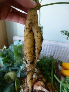 A rather masculine carrot. George found this very entertaining.