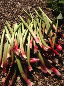 Some rather tasty stalks of Rhubarb.....custard anyone?