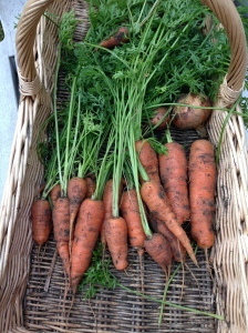 A lovely selection of Carrots, with a couple of Onions that I'd missed.