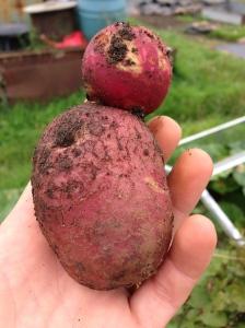My Potato Man!!