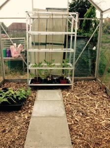 The first of the staging and tomatoes in the greenhouse. There is lots more to follow.