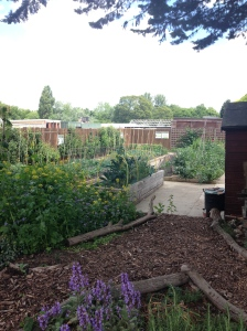 What a lovely looking vegetable patch. Perfect in every way.