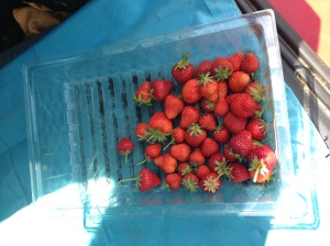 Fresh strawberries warmed by the sun. There is nothing more delicious.