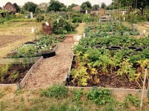 Apart from the compost heaps to sort out (a winter job), plot 2 is complete.