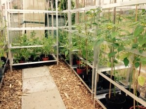 The greenhouse plants are growing well.