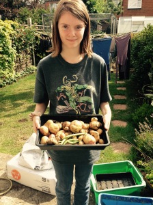 Potatoes from just a couple of plants. That's enough for several dinners for us lot.