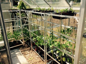 And the right hand side of the greenhouse.