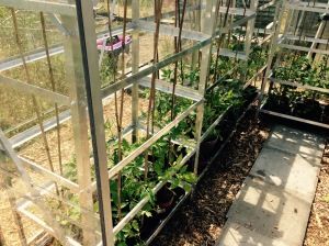 The left hand side of the greenhouse.