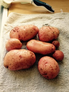 All from one Potatoes plant. Some great sized spuds perfect for baking.