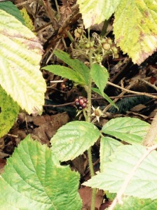 Look in the middle of the photo and behind the brambles. Have you found it?