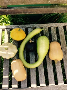 Another harvest from my mystery selection of Squash.