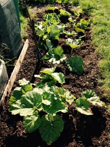 Another successful year on the eRhubarb front. You can rest over the winter my precious!!