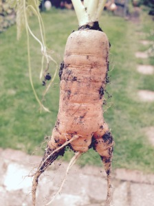 Give this Carrot a couple of wings and it'll look like a chicken all ready for the oven.