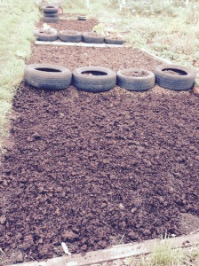 4 beds are manured and ready....just loads more still to do.
