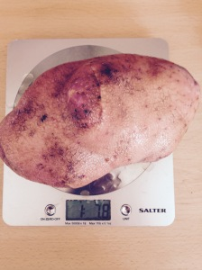 And in the right corner, weighing in at 1 lb 7.8 oz!!! Oval Spud!!