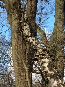 This tree decided to nestle in the branches of a neighbouring tree.