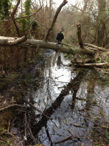 This is a path, but just flooded from the neighbouring field, and very muddy. Lucky we wore our wellies!
