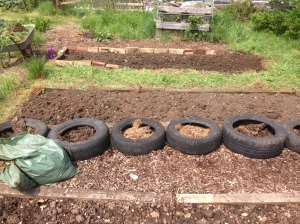 That's another couple of beds done. So nearly a quarter of my area is done, just the other three quarters to go.