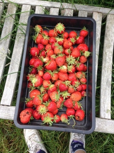 More than enough Strawberries for us all to have a large bowl for pudding each.
