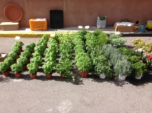 If only my herbs would grow like these ones.