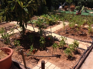 Part of Chrissie and Tony's vegetable patch.