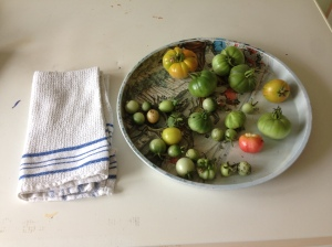 Place any green tomatoes on a tray and cover with a tea towel. They'll soon ripen.