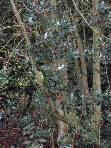 Berries ready for the birds this winter.